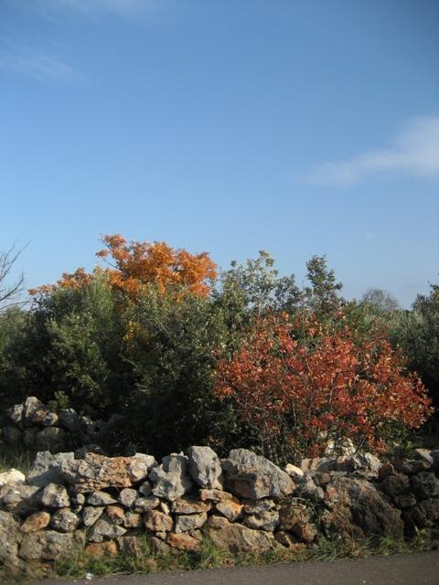 Autumn colours on winter trees