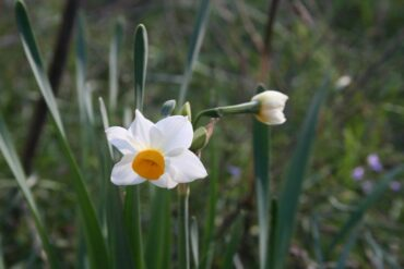 First signs of Spring  –  2020/47