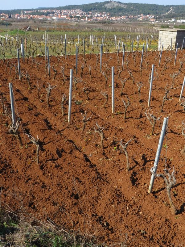 Vines pruned and soil turned