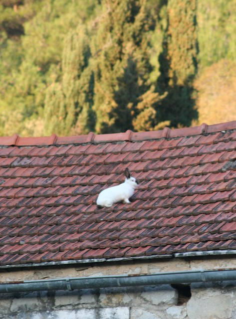 Roof rabbit