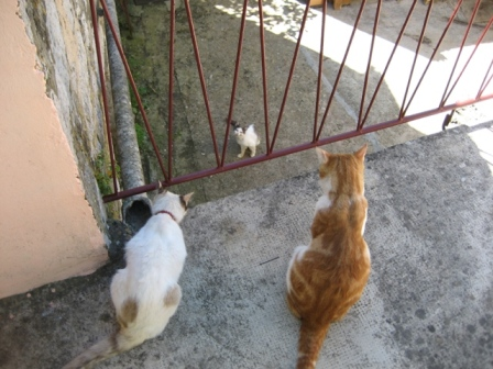 Meeting the neighbours