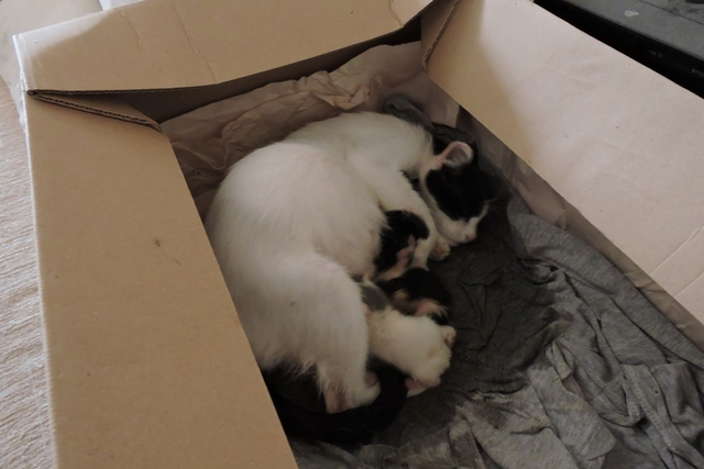 First three newborn kittens