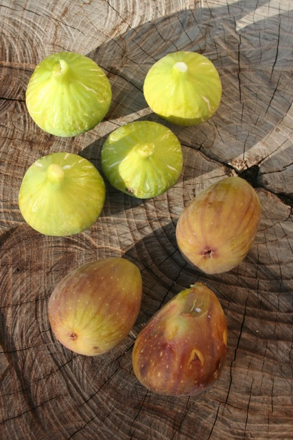 Common and Brown Turkey figs