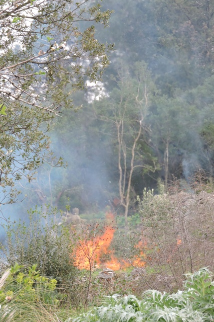 A controlled burn on the edge of the Maquis
